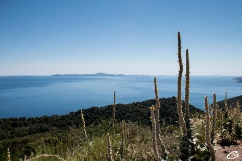 Paysage de l'île de Korkula